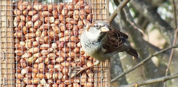 duhallow birdwatchers